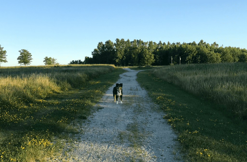Trails and Beaches in Central and South Sarnia